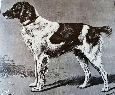 Arvor Du Du Wha Ker- Paris dog show winner 1908
