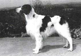 Rusty Of Beelflower Too 1977