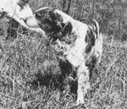 Kaer De Cornouaille c.1938